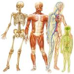 bodies bones muscles cardio etc