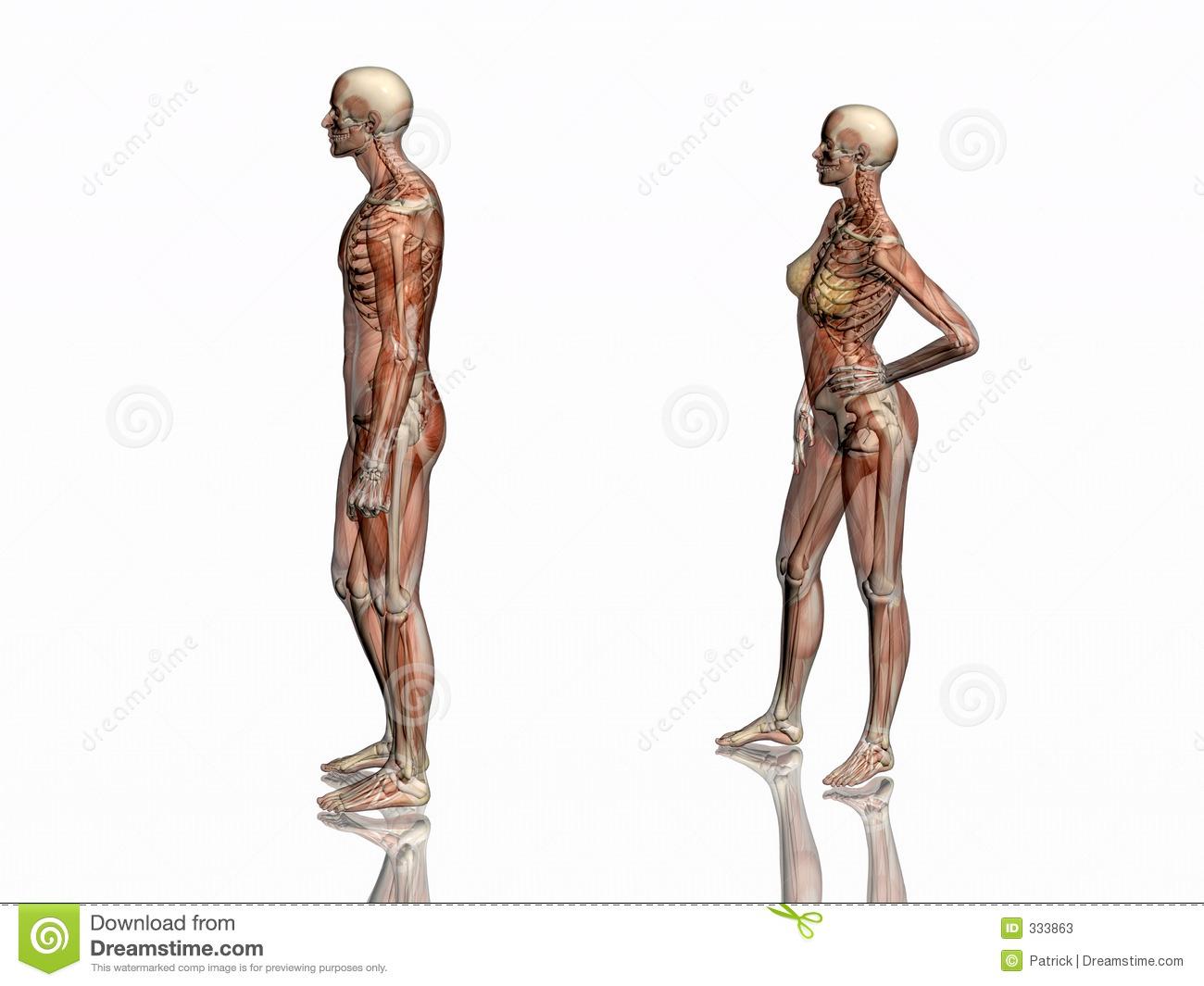 Experiential Anatomy Focus Pocus
