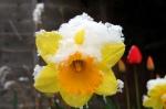 spring-snow