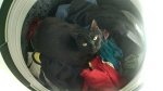 phoenix in the washer