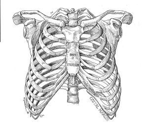 INOL ribs
