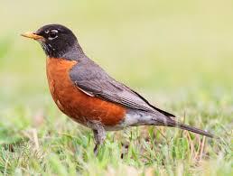 extraordinary life robin