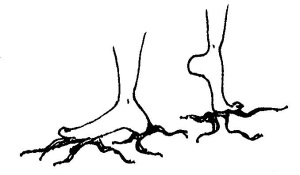 feet roots