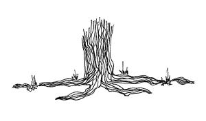 roots 1
